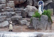 Japan's anime-loving penguin Grape-kun passes away at Tobu Zoo